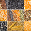 Collage texture of Cereal Grains and Seeds — Stock Photo #21251025