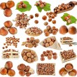 Hazelnut filbert nuts , collection set isolated on a white background — Stock Photo #21251093