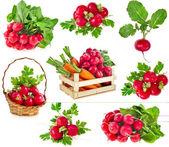 Fresh red radish isolated on white background cutout — Stock Photo