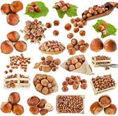 Hazelnut filbert nuts , collection set isolated on a white background — Stock Photo