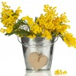 Bouquet mimosa acacia flowers with heart note card in a bucket of zinc, decorative card on white - Stock Photo