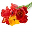 Beautiful bouquet of colored tulips isolated on white background — Stock Photo #23528889