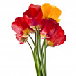 Beautiful bouquet of colored tulips isolated on white background — Stock Photo #23528929