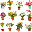 Collection set of colorful bouquet flower in flowerpot and bucket, isolated on white background — Stock Photo #23529019