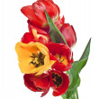 Beautiful bouquet of colored tulips isolated on white background — Stock Photo #23529061