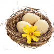 Stock Photo: Nest with egg on white background