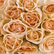 Wedding bouquet of cream roses texture background — Stock Photo #23529151