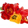 Beautiful bouquet of colored tulips isolated on white background - Stock Photo
