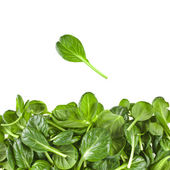 Border of fresh green leaves spinach or pak choi isolated on a white background — Stock Photo