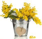 Bouquet mimosa acacia flowers with heart note card in a bucket of zinc, decorative card on white — Stock Photo