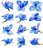 Bellissimo fiore orchidea sentito collezione impostata su sfondo bianco — Foto Stock