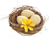 Nest with egg on a white background — Stock Photo