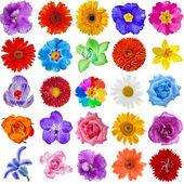 Zestaw kolekcja kolorowych głów kwiat na białym tle na białym tle — Zdjęcie stockowe