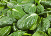 Fresh green leaves spinach or pak choi texture background — Stock Photo