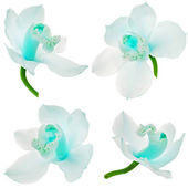 Orkide çiçek beyaz zemin üzerine izole kapanışını koleksiyonu kurmak — Stok fotoğraf