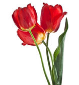 Beautiful bouquet of colored tulips isolated on white background — Stock Photo