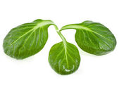 Fresh green leaves spinach or pak choi close up macro , isolated on a white background — Stock Photo