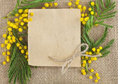 Mimosa acacia branches on the surface texture of burlap frame — Stock Photo