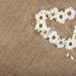 Flowers daisy shape heart on a canvas background — Stock Photo