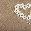 Flowers daisy shape heart on a canvas background - Foto Stock