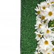 Chamomile flower on artificial green grass - Stock Photo