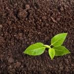 Seedling green plant — Stock Photo #25340539