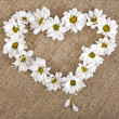 Flowers daisy shape heart on a canvas background - Foto de Stock