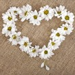 Flowers daisy shape heart on a canvas background - Stock Photo