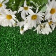 Chamomile flower on artificial green grass — Stock Photo #25340677