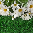 Chamomile flower on artificial green grass — Stock Photo
