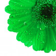 One daisy head - Stock Photo