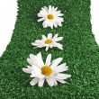 Chamomile flower on artificial green grass — Stock Photo #25340959