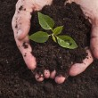 Hands holding sapling in soil surface — Stock Photo #25340967