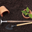 Gardening tools — Stock Photo #25341201