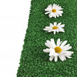 Chamomile flower on artificial green grass — Stock Photo #25341231