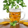 Stock Photo: Beer mug with fresh hop plant