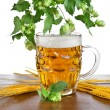 Beer mug with fresh hop plant — Stock Photo