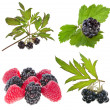 Collection set of Blackberries ( dewberries), raspberries — Stock Photo #25341329