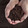 Stock Photo: Hand holding soil