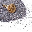 Poppy seeds and poppy head top - Stock Photo