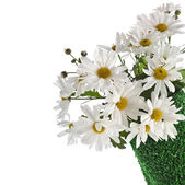 Chamomile flower bouquet in rolled green grass vase — Stock Photo