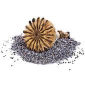 Haşhaş tohumu ve haşhaş baş üst — Stok fotoğraf