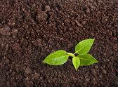 Sazenice zelená rostlina — Stock fotografie