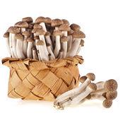 Shimeji mushroom — Stock Photo