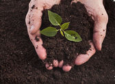 Hands holding sapling in soil surface — 图库照片