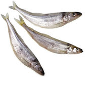 Fresh smelts Baltic fish — Stock Photo