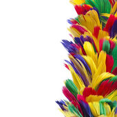 Border of different colored feathers — Stock Photo