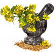 Marble mortar with pestle and flowering mustard — Stock Photo