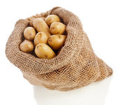 Raw potatoes heap with sack cloth — Stock Photo