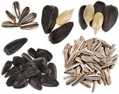 Collection of sunflower seed — Stock Photo
